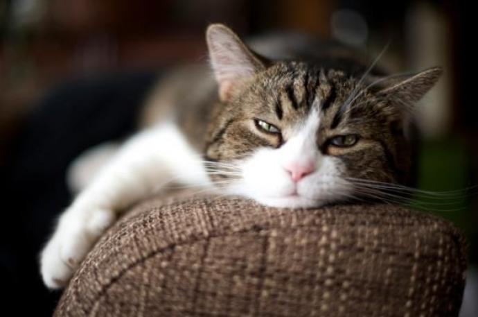 Cómo cuidar tu sofá cama del pelo de tus mascotas