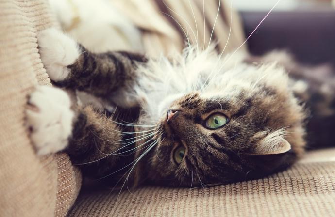 Cómo proteger tu sofá de cama de tus mascotas… y de tus hijos